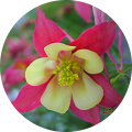 check out our deer resistant plants